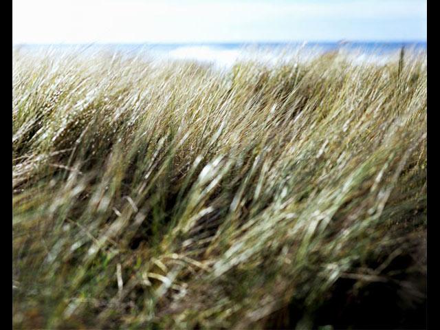 grass1_small